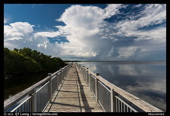 Boardwalk and mangroves, Convoy Point. Biscayne National Park (color)