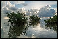 Mangroves and Atlantic Ocean, Boca Chita Key. Biscayne National Park ( color)