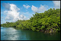 Shore with mangroves, Swan Key. Biscayne National Park ( color)