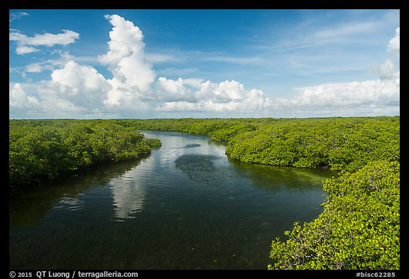 Narrow channel lined with mangroves. Biscayne National Park (color)