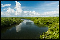 Narrow channel lined with mangroves. Biscayne National Park ( color)