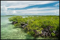 Clear water and mangoves, Linderman Key. Biscayne National Park ( color)
