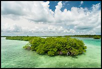 Mangrove islet, Linderman Key. Biscayne National Park ( color)