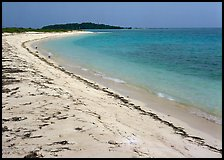 Beach on Bush Key with beached seaweed. Dry Tortugas National Park ( color)