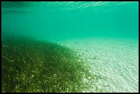 Underwater view of seagrass and sand, Garden Key. Dry Tortugas National Park, Florida, USA.