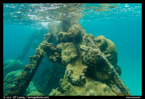Coral-covered part of Windjammer wreck breaking surface. Dry Tortugas National Park (color)