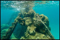 Coral-covered part of Windjammer wreck breaking surface. Dry Tortugas National Park, Florida, USA. (color)