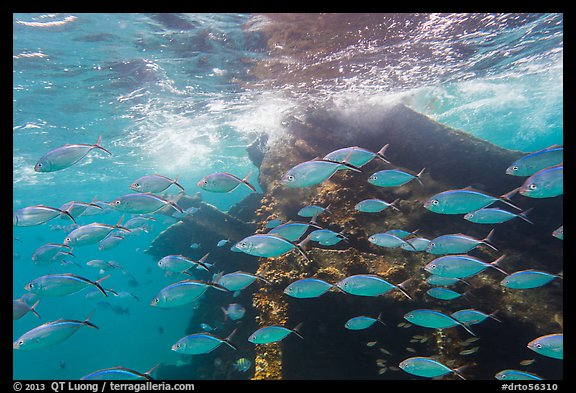 School of tropical fish and Windjammer wreck. Dry Tortugas National Park (color)