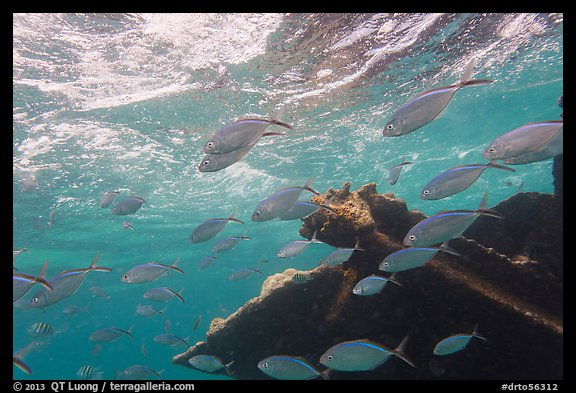 Fish around Windjammer wreck. Dry Tortugas National Park (color)