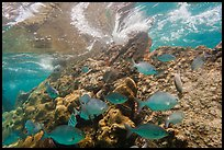 Fish, Windjammer Wreck, and surge. Dry Tortugas National Park ( color)