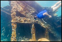 Free diver exploring Windjammer Wreck. Dry Tortugas National Park ( color)