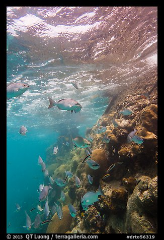 Marine wildlife around Windjammer Wreck. Dry Tortugas National Park (color)