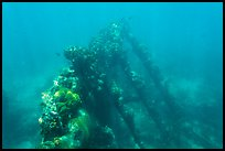 Sunken wreck of Avanti. Dry Tortugas National Park ( color)