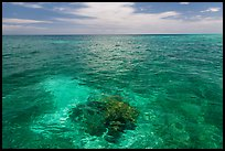 Coral head and ocean, Loggerhead Key. Dry Tortugas National Park, Florida, USA. (color)