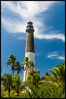 Palm trees and Dry Tortugas Light Station, Loggerhead Key. Dry Tortugas National Park, Florida, USA. (color)