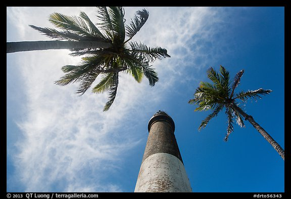 Looking up palm trees and Loggerhead Lighthouse. Dry Tortugas National Park (color)