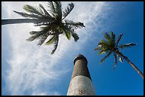 Looking up palm trees and Loggerhead Lighthouse. Dry Tortugas National Park, Florida, USA. (color)