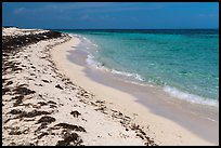 Beach with beached seagrass, Loggerhead Key. Dry Tortugas National Park ( color)