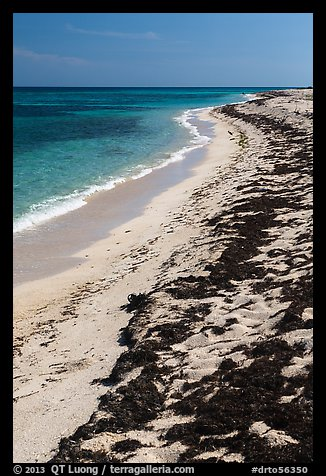 Beached seagrass and shoreline, Loggerhead Key. Dry Tortugas National Park (color)