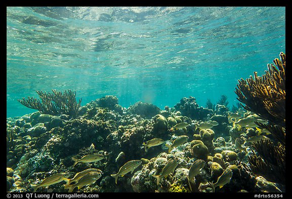 Fish and coral reef, Little Africa, Loggerhead Key. Dry Tortugas National Park (color)