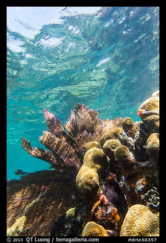 Brain and fan corals, Little Africa, Loggerhead Key. Dry Tortugas National Park (color)
