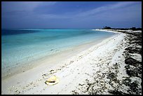 Conch shell and beach on Bush Key. Dry Tortugas  National Park, Florida, USA.