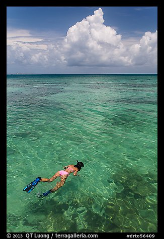 Woman snorkeling. Dry Tortugas National Park (color)