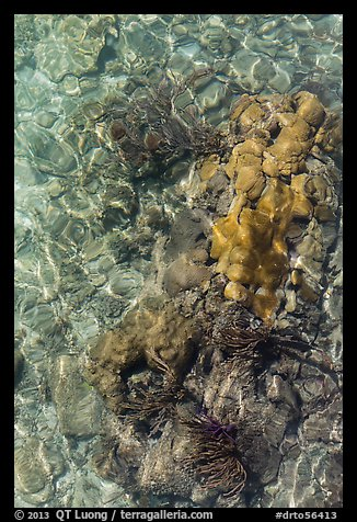 Coral underwater seen from above, Garden Key. Dry Tortugas National Park (color)