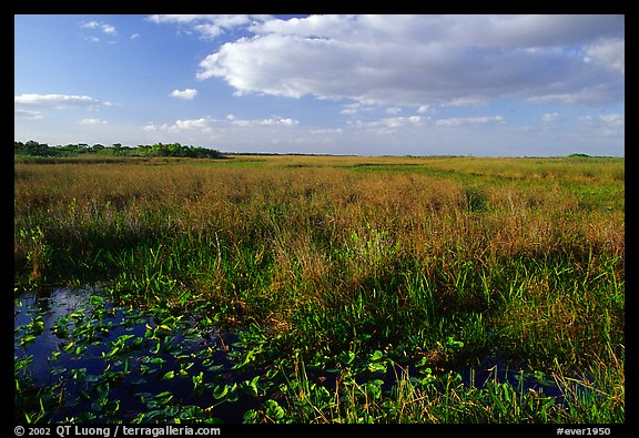 Marsh near Ahinga trail, late afternoon. Everglades National Park (color)