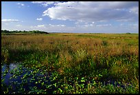 Marsh near Ahinga trail, late afternoon. Everglades National Park, Florida, USA. (color)