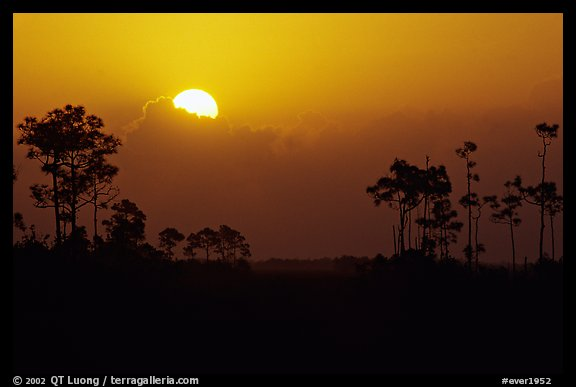 Sun emerging from behind cloud and  pine group. Everglades National Park (color)