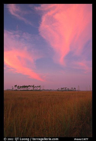 Sawgrass prairie, pines, and clouds at sunrise, near Mahogany Hammock. Everglades National Park (color)