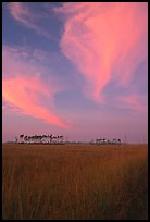 Sawgrass prairie, pines, and clouds at sunrise, near Mahogany Hammock. Everglades National Park, Florida, USA. (color)