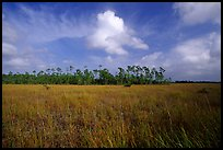 Sawgrass prairie and slash pines near Mahogany Hammock. Everglades National Park, Florida, USA. (color)