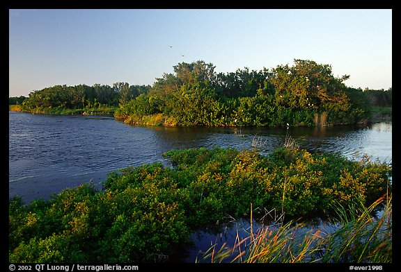 Eco pond with birds in distant trees, evening. Everglades National Park (color)