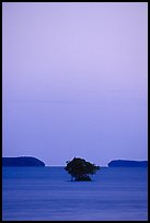 Mangroves trees and low islands in Florida Bay, dusk. Everglades National Park ( color)
