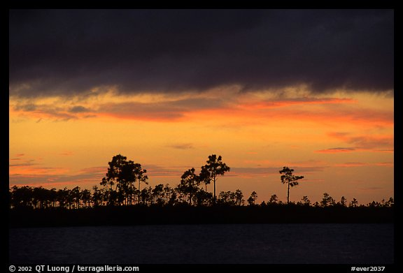 Stormy sunset and pine trees,  Pine Glades Lake. Everglades National Park (color)
