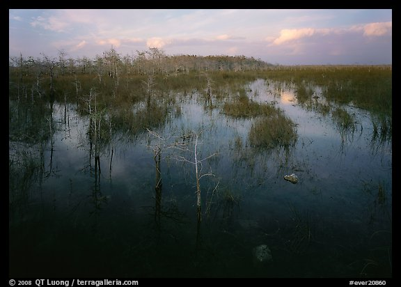 Freshwater marsh with Pond Cypress and sawgrass, evening. Everglades National Park (color)