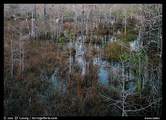 Swamp with sawgrass and cypress seen from above, Pa-hay-okee. Everglades  National Park (color)