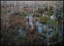 Freshwater swamp with sawgrass and cypress seen from above, Pa-hay-okee. Everglades National Park, Florida, USA. (color)