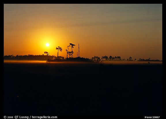 Sunrise with pine trees and ground fog over meadow. Everglades  National Park (color)
