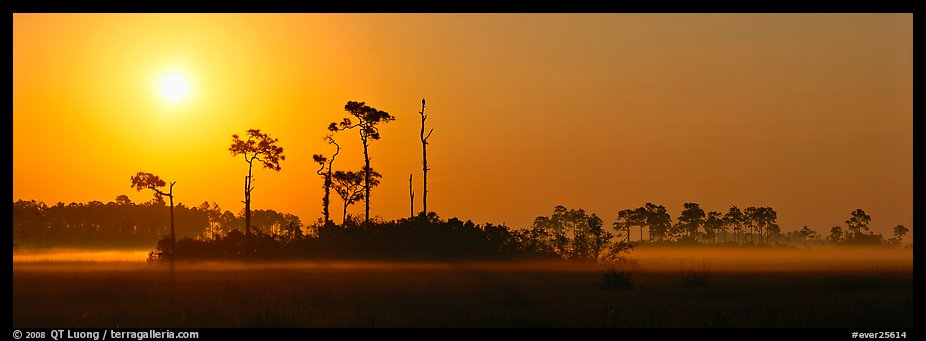Sunrise landscape with mist on the ground. Everglades  National Park (color)