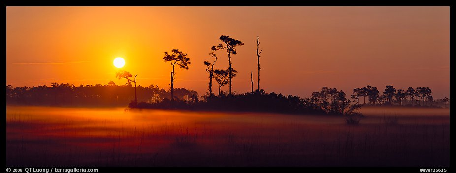 Sun rises above pine trees and a layer of mist on the ground. Everglades National Park (color)
