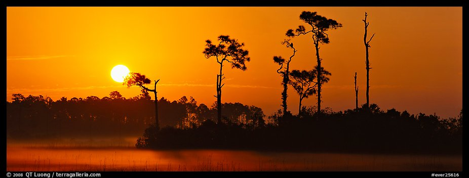 Sun rises above isolated pine trees. Everglades  National Park (color)