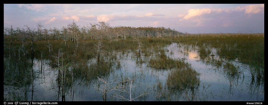 Swamp landscape in the evening. Everglades National Park (color)