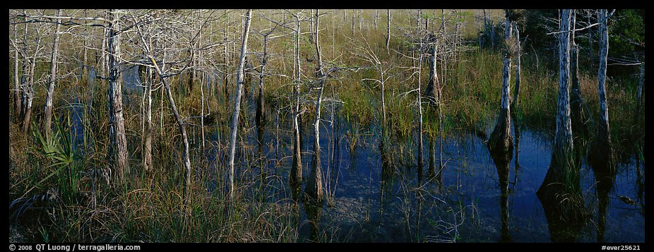 Marsh scene with cypress trees and reflections. Everglades National Park (color)