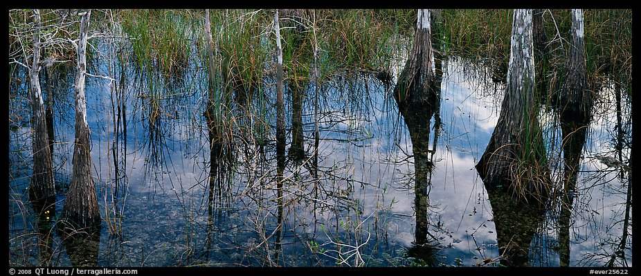 Calm sky and cypress trees reflections. Everglades National Park (color)