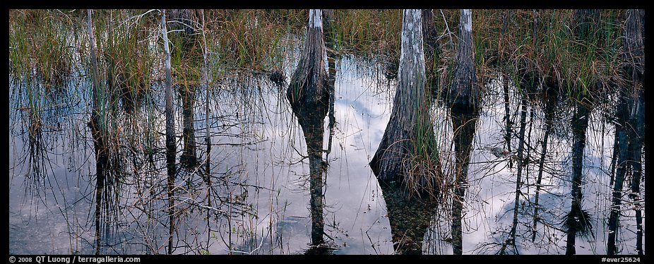 Cypress reflections. Everglades National Park (color)
