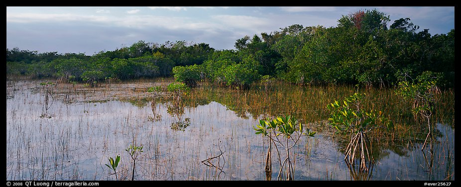 Mixed Marsh landscape with mangroves. Everglades  National Park (color)