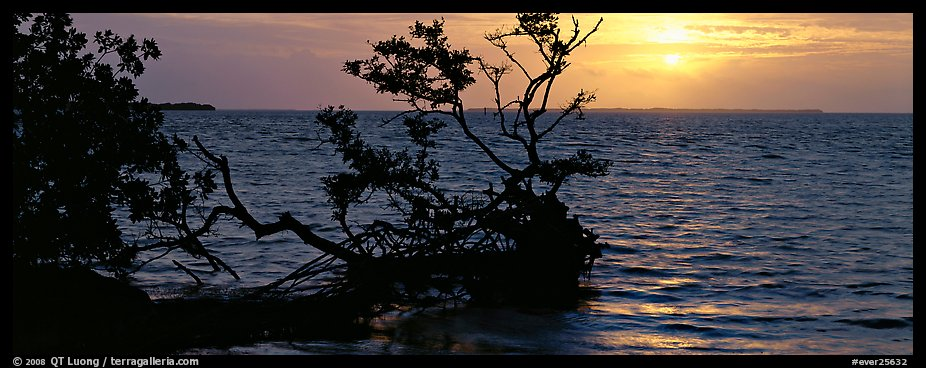 Mangroves and sunrise over Florida Bay. Everglades National Park (color)